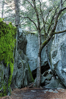 Photograph - Tree Against Blue Rock by Belinda Greb