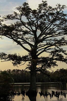 Tree Against The Sky Art Print by Carolyn Ricks