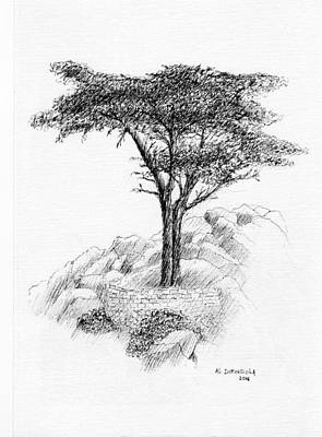 Drawing - Tree At Pebble Beach by Al Intindola