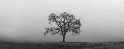 Photograph - Tree Alone In The Fog by Todd Aaron