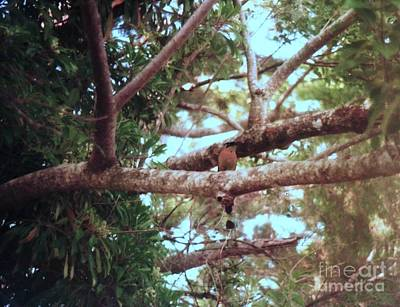 Photograph - Tree And Bird Cost Rica by Ted Pollard