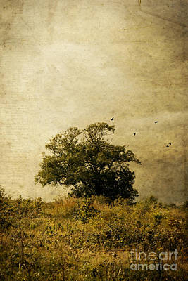 Photograph - Tree And Birds by Clayton Bastiani