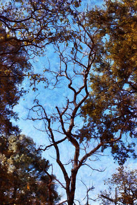 Abstract Shapes Janice Austin Royalty Free Images - Tree and blue sky Royalty-Free Image by Ashish Agarwal