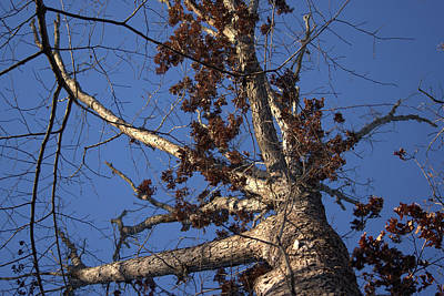 Photograph - Tree And Branch by Buddy Scott