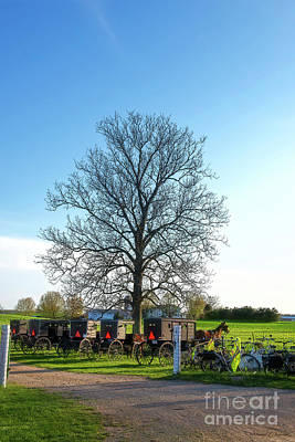 Photograph - Tree And Buggies by David Arment