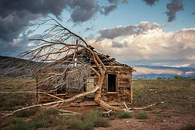 Photograph - Tree And Cabin by Whit Richardson