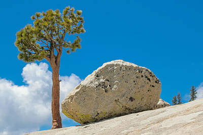 Photograph - Tree And Erratic by Phil Stone