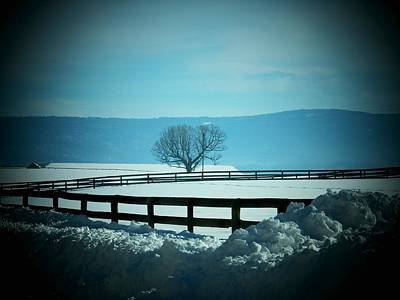 Photograph - Tree And Fence In Snow by Joyce Kimble Smith