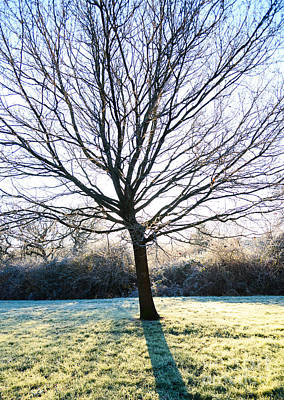 Photograph - Tree And Frost by Colin Rayner