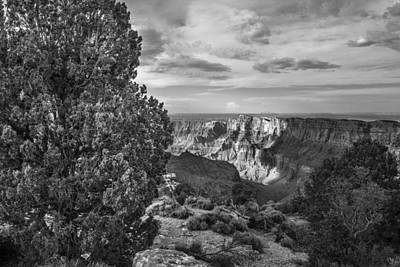 Photograph - Tree And Grand Canyon Black And White  by John McGraw