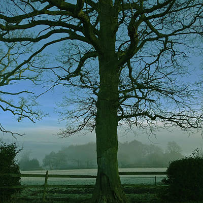 Photograph - Tree And Mist by Anne Kotan