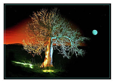 Moonlit Night Photograph - Tree And Moon by Mal Bray