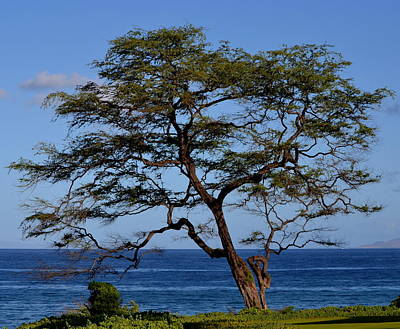 Photograph - Tree And Ocean by Dean Ferreira
