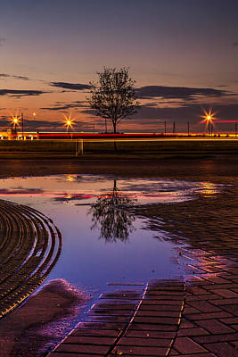 Photograph - Tree And Puddle Reflection Sugar Land Texas by Micah Goff