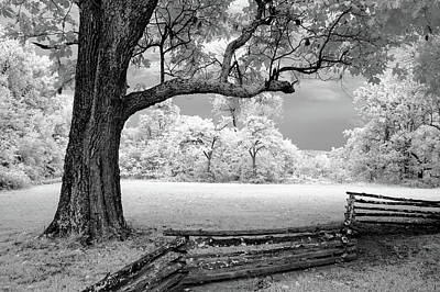Photograph - Tree And Split Rail Fence by James Barber