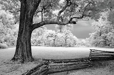Split Rail Fence Photograph - Tree And Split Rail Fence by James Barber