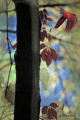 Photograph - Tree And Red Bird by Fran Kelly