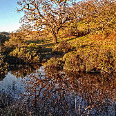 Photograph - Tree and Reflection by Dan Reich