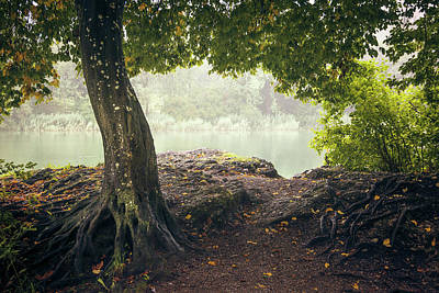 Photograph - Tree And Rock by Alexander Kunz