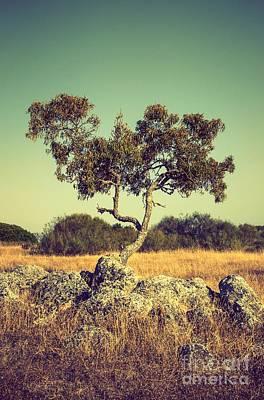 Olive Photograph - Tree And Rocks by Carlos Caetano