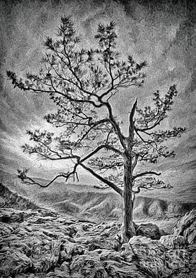 Art Print featuring the photograph Tree And Rocks In The Blue Ridge Near Sunset Bw by Dan Carmichael