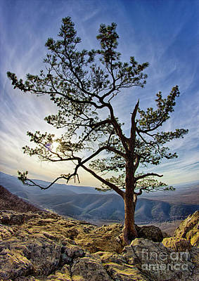 Photograph - Tree And Rocks In The Blue Ridge Near Sunset by Dan Carmichael
