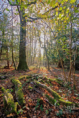 Photograph - Tree And Roots - Leigh Woods by Colin Rayner