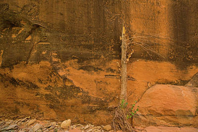 Photograph - Tree And Sandstone by Kunal Mehra