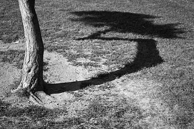 Photograph - Tree And Shadow I Bw by David Gordon