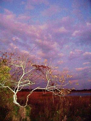 Wildwood Park Painting - Tree And Sky At Cape May Point State Park  Nj by Eric  Schiabor
