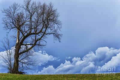 Tree And Stormy Sky Art Print