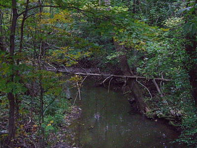 Indiana Landscapes Photograph - Tree And Stream by Michael L Kimble