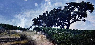 Photograph - Vineyard Tree by Gilbert Artiaga