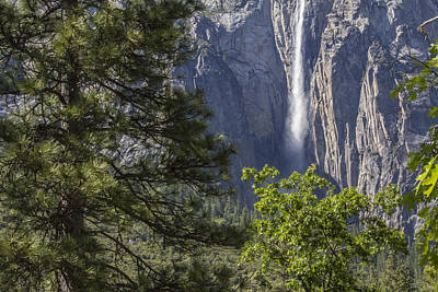 Photograph - Tree And Waterfall In Yosemite  by John McGraw