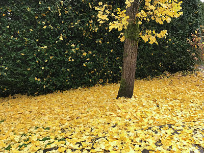 Photograph - Tree And Yellow Leaves by John Clark