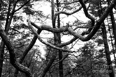 Photograph - Tree Arms by John Rizzuto