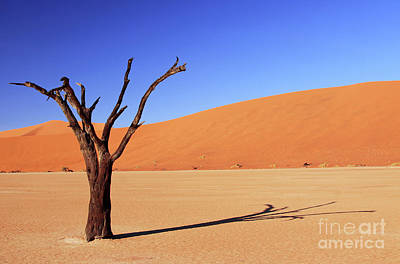 Photograph - Tree At Dead Vlei, Namibia by Wibke W