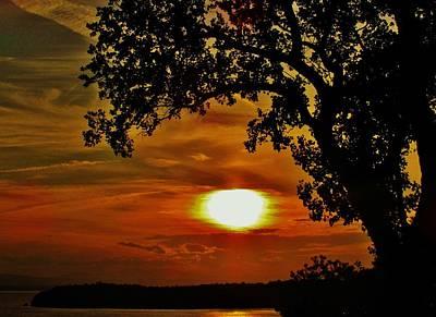 Photograph - Tree At Dusk by Todd Rojecki