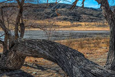 Tree At Elizabeth Lake Art Print