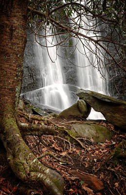 Photograph - Tree At Falls by Greg Mimbs