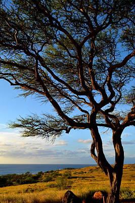 Photograph - Tree At Lapakahi State Historical Park by Lori Seaman