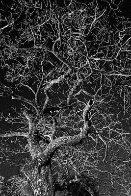 Photograph - Tree At Night by Jocelyn Kahawai