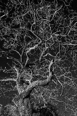 Photograph - Tree At Night by Jocelyn Kahawai