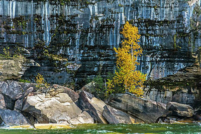 Photograph - Tree At Picture Rock Cruise by Lonnie Paulson