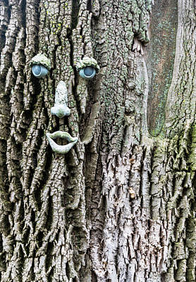 Photograph - Tree At Princeton Theological Seminary by Steven Richman