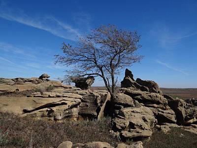 Photograph - Tree At Stirling Rock by Keith Stokes