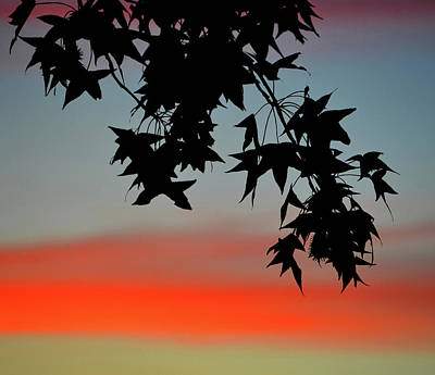 Photograph - Tree At Sunset by David Lee Thompson