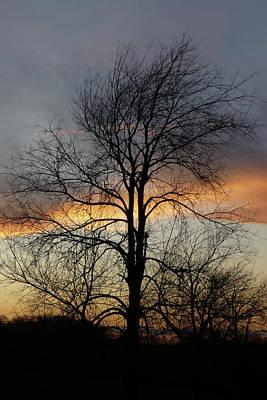 Tree At Sunset Art Print by Jerry Weinstein