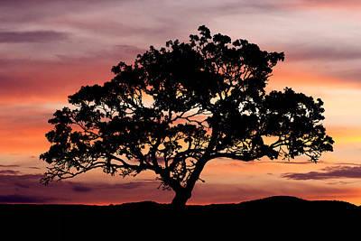 Tree At Sunset Art Print by Paul Huchton