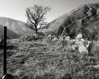 Photograph - Tree At Tejon Pass by Timothy Bulone